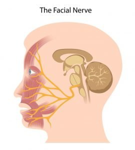 Bell's palsy is due to pressure on facial nervefacial nerve